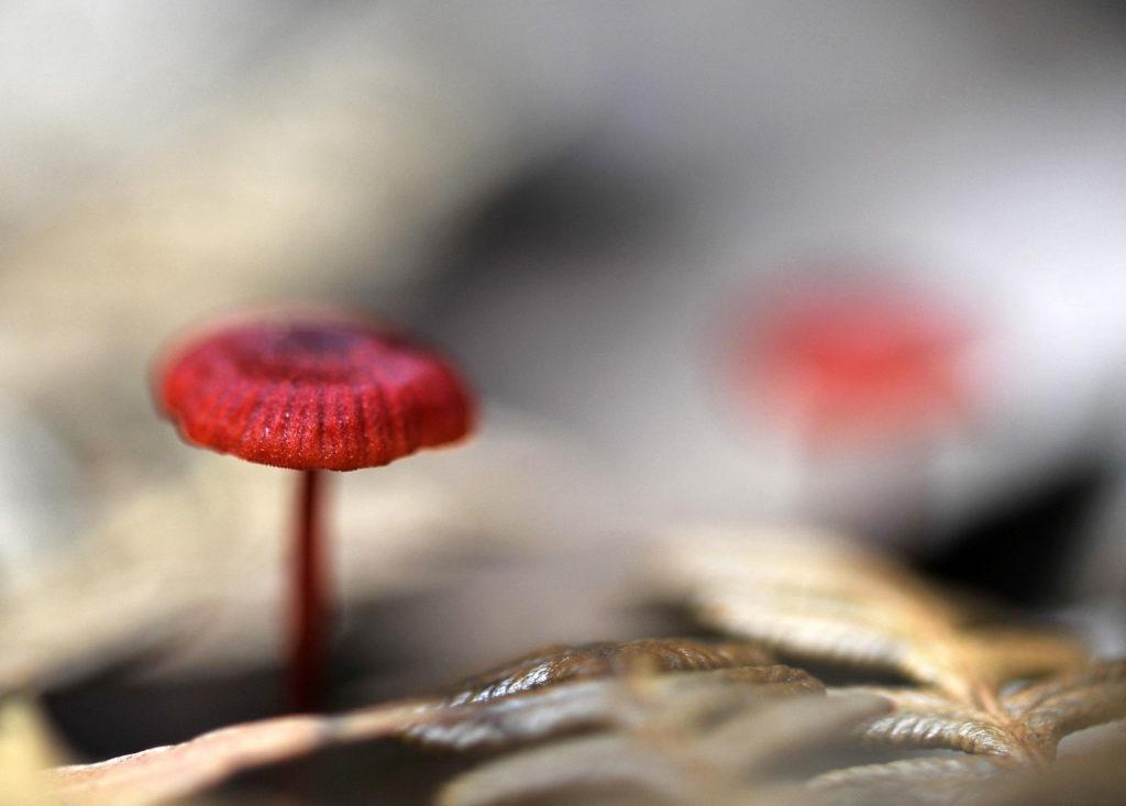 kew gardens, fungi, fungus, mycology