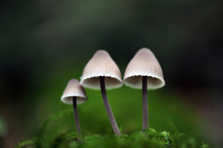 Ard Choille, fungi, fungus, mushroom, foray, heritage garden