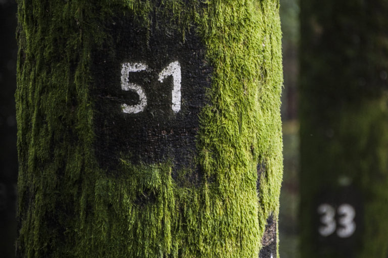 forest of numbers biel beech